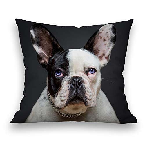 Decorative Throw Pillow Covers 18x18 Inch French Bulldog Blue Eyes Adorable Age Animal Black Blackboard Blue Canine Cute Dog Pillowcase for Sofa or Bed