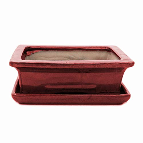 Exotenherz - Bonsai-Schale mit Unterteller Gr. 3 - Rot - eckig - Modell G29 - L 18cm - B 13cm - H 6cm
