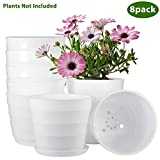 ZOUTOG Flower Pot, 6 inch Plastic Flower Planters with Drainage Hole and Tray, Pack of 8 - Plants Not Included