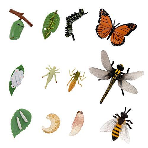 Yardwe 3 Sets Groei Cyclus Dier Groei Cyclus Biologische Model Groei Levensechte Bee Levenscyclus Model Set Voor Kinderen Onderwijs Insect Thema Party Gunsten