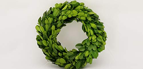 Tradingsmith Preserved Boxwood Candle Ring - 6 inch