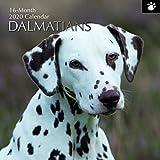 2020 Wandkalender - Dalmatiner Kalender, 30 x 30 Zentimeter Monatsansicht auf Englisch, 16-Monat, Hunde und Haustiere Thema, Enthält 180 Anzeigen-Aufkleber