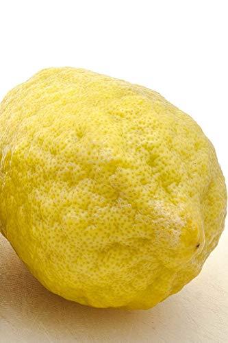 Bio-Saatgut Nicht nur Pflanzen: 1 Glon (4 & # 034; Citra): Yuzu Zitrone, tic, Obst, (Cant Schiff AZ CA LA TX) mit der Faehre