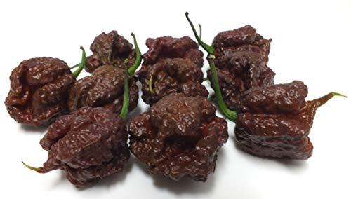 冷凍 最強激辛唐辛子 キャロライナ・リーパー果実×15個入り(チョコレート色・品種)