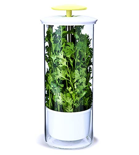 NOVART XXL Premium Glass Herb Keeper and Herb Storage Container – Savor Preserver for Cilantro, Mint, Parsley, Asparagus, Keeps Greens Fresh for 2-3 Weeks