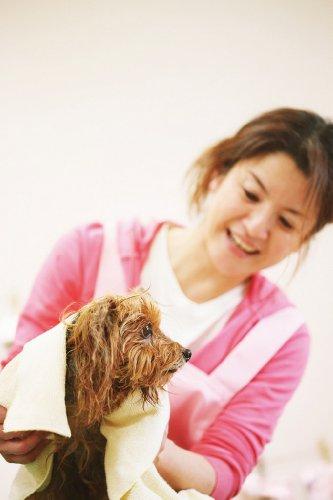 LION(ライオン)『ペットキレイのみ・マダニとりリンスインシャンプー犬猫用グリーンフローラルの香り』