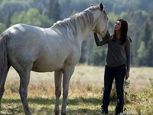 Wo die wilden Pferde leben