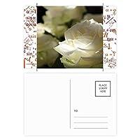 ダーク・ビッグサイズの白いバラ 公式ポストカードセットサンクスカード郵送側20個