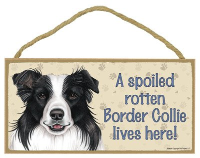 SJT ENTERPRISES, INC. A Spoiled Rotten Border Collie Lives here Wood Sign Plaque 5' x 10' (SJT61912)