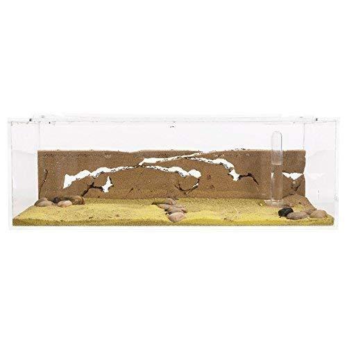 AntHouse - Natürliche Ameisenfarm aus Sand - Big Acryl Starter Set 30x15x10 cm (Ameisen)