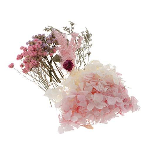 Hellery Natürliche Echte Getrocknete Gepresste Blätter Blumen Für Kunsthandwerk Kerze Seifenkarten - A