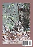 Zoom IMG-1 diario di caccia scolopax rusticola