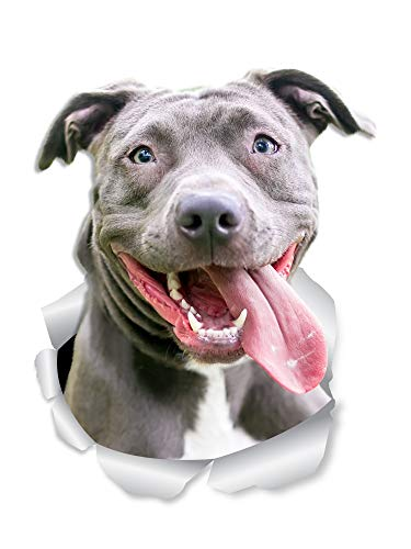 Winston & Bear Happy Pit Bull Dog Wall Decals - 2 Pack - Bully 3D Sticker Decals for Walls, Cars, Toilet and More - Retail Packaged American Bully Gifts