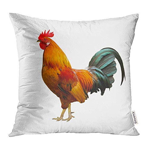 Emvency 20x20 inch Throw Pillow Covers Decorative Case Red Cock Beautiful Rooster White Brown Tail Chicken Portrait Bird Side Male Farm Cover Square Pillowcase Cushion Cases Print On Two Sides