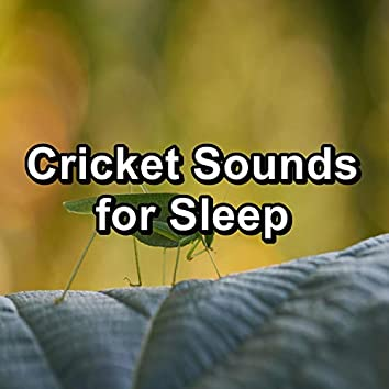 Cricket Sounds for Sleep