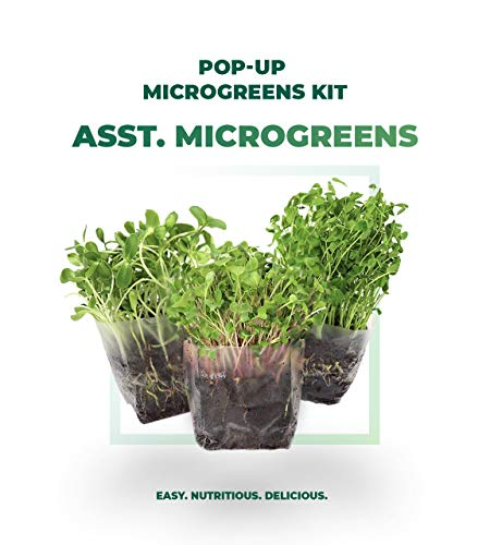 Window Garden Assorted Indoor Microgreens Seed Starter Vegan Growing Kit  Includes Seeds, 3qts Organic Fiber Potting Soil and Pop-Up Bag  Add Water and Grow Vegetables for Healthy Salads