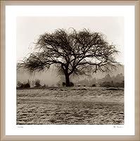 ポスター アラン ブラウステイン Willow Tree 額装品 ウッドベーシックフレーム(オフホワイト)
