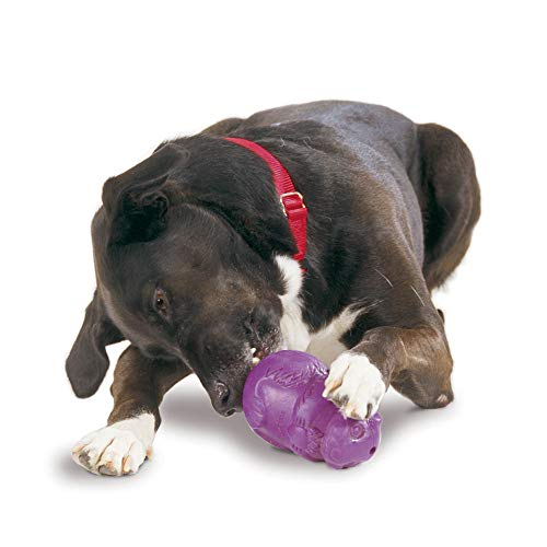 petsafe chew toys for dogs PetSafe Busy Buddy Squirrel Dude Dog Toy - Treat Dispensing Toy – Extra Small, Small, Medium and Large Sizes