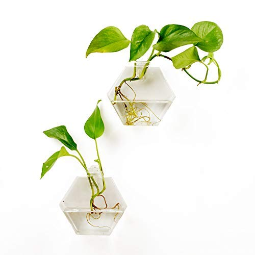 2 Packs Home Decor Wall Accessories Geometric Hexagonal Glass Vase Wall Sticked Planters Flower Pots/Water Planter Vase