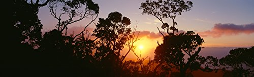 Preisvergleich Produktbild The Poster Corp Carl Shaneff / Design Pics Hawaii Kauai Kalalau Valley Lehua Trees Silhouetted at Sunset Pink Orange Clouds Golden Sunball. Photo Print (71, 12 x 20, 32 cm)