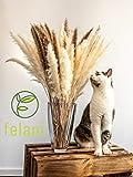 felani® Pampasgras getrocknet - 15 Stück in weiß I natürlich & besonders fluffig - echte Trockenblumen Wedel - Wohnzimmer Deko - Phragmites Communis - 5