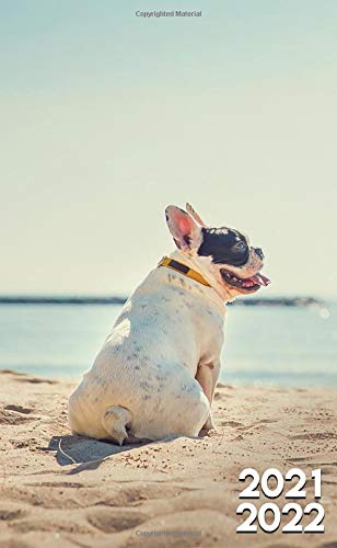 2021-2022: Lazy Frenchie Dog Two Year (24-Months) Monthly Pocket Planner Organizer Calendar Agenda - Tropical Summer Vacation