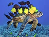 5D pintura de diamantes tortuga cuadrado completo bordado de diamantes mosaico océano Animal imágenes de diamantes de imitación decoración del hogar A4 60x80cm