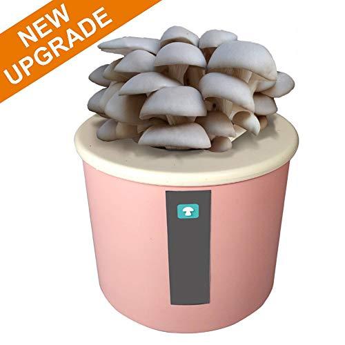 M-TOP Pleurotes Mycelium Kit - Champignon a Faire Pousser chez Soi - DIY Boîte à Champignons Pret a Pousser pour Enfantspink-Gray Oyster Mushroom