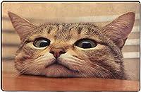 好奇心旺盛なかわいい猫がテーブルの上で熱心な目であなたを見てください超柔らかい屋内モダンエリアラグふわふわラグダイニングルームホームベッドルームカーペットフロアマットベビーキッズ犬猫60x39インチ-80x58インチ