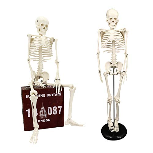 Koopro Anatomical Human Skeleton Model Removable Arms and Legs for Better Observing and Studying All Mobile Joints for Easy Manipulate Interactive Medical Replica for Educating and Teaching (34')
