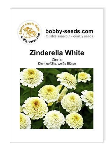 Zinderella White Zinnien Samen von Bobby-Seeds Portion