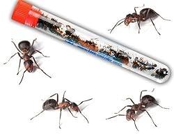 Live Ant Farm