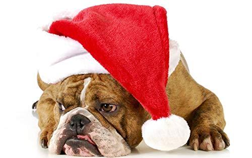 Gednxercc 5D diamant schilderset DIY volledige diamant Engelse bulldog met kerstmuts kruissteek borduurwerk kunst muur decoratie geschenk handwerk 15,7 × 19,7 inch