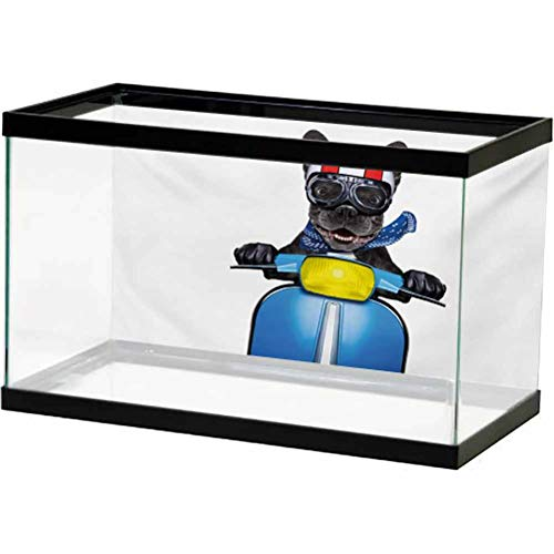 Dog Driver Aquarium Background Fish Tank Decorations Pictures Quirky French Bulldog on Scooter with Helmet Goggles Rocker Puppy Decoration Studio Props Charcoal Grey Cobalt Blue L24 X H16 Inch