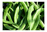 White Half Runner Green Bean 25 Seeds Garden Vegetable Pole Type Produces high yields 4' Gourmet...