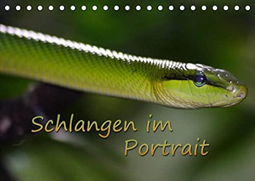 Schlangen im Portrait (Tischkalender 2022 DIN A5 quer)