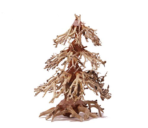 Bonsai Driftwood Mini Aquarium Christmas Tree NOX (6 Inch Height) Natural, Handcrafted Fish Tank Decoration | Helps Balance Water pH Levels, Stabilizes Environments | Easy to Install