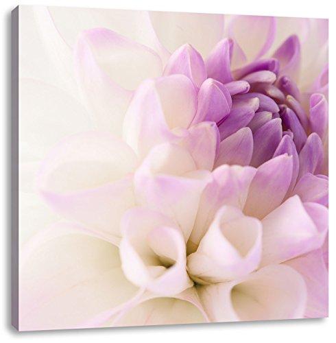 Pixxprint Traumhafte lila weiße Blüte/Format: 60x60cm / Leinwandbild fertig bespannt Wandbild Kunstdruck