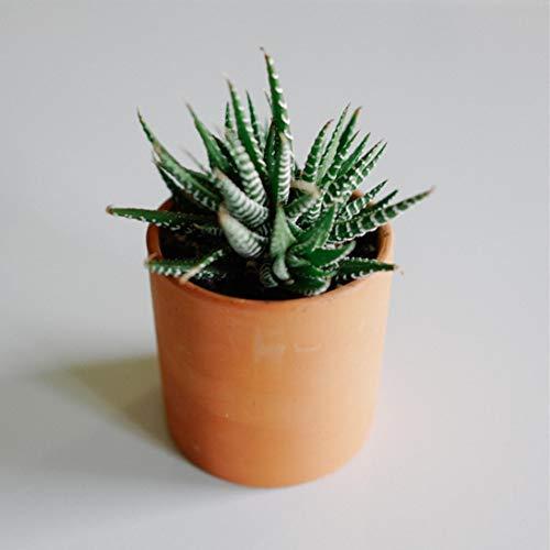 Zayla's Houseplant - Maceta cilíndrica de Terracota – Mínimo – Agujero de Drenaje – Tamaño de alféizar