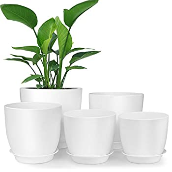 Best pot plant Reviews