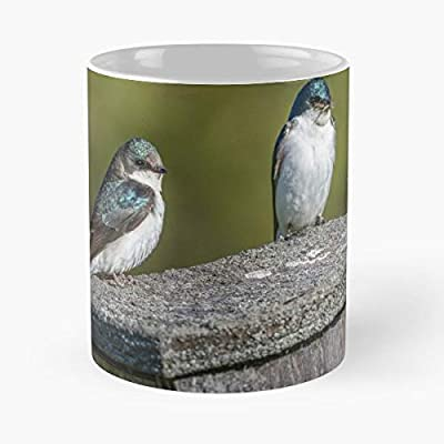 Wildlife Birds Green Background Insects Pair Of Swallows Birdhouse Feeding Time Swallows Top Selling 11 Ounce Novelty White Ceramic Mug 2020