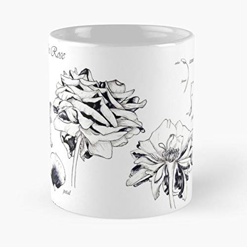 92Novafashion Pieces Rosaceae Detail Botanical Rose Botany Study Flower Best 11 oz Kaffeebecher - Nespresso Tassen Kaffee Motive