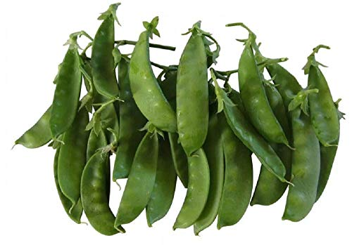 Oregon Giant Snow Pea Seeds- 50 Count Seed Pack
