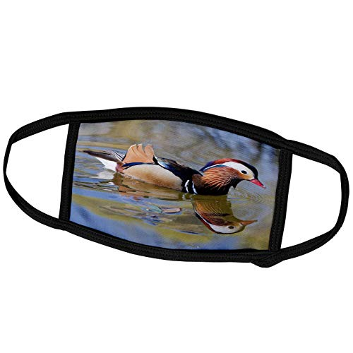 3dRose China, Beijing, Male Mandarin Duck Swimming in Pond - AS07. - Face Covers (fc_132357_2)