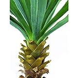 artplants.de Set 2 x Künstliche Yucca Palme mit 40 Blättern, 120 Blüten, 220cm, wetterfest - Kunstpflanzen Yucca - Kunstpalme - 4