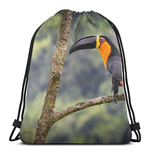 Affordable shop Toucan Ariel Toucan Bird Branch Background Drawstring Backpack Bag Lightweight Gym Travel Yoga Casual Snackpack Shoulder bag for Hiking Swimming beach