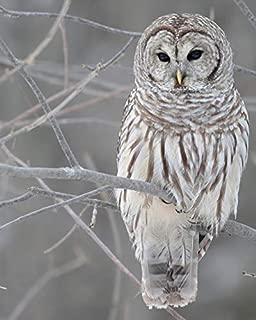 Barn Owl - Bird 11 x 14 * 11x14 Glossy Photo Picture Image #8