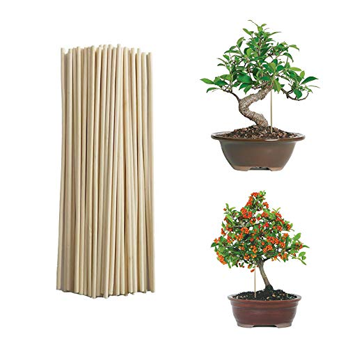 50Pcs Bamboo Plant Grow Support Sticks, Garden Potted Flower Canes Rod Wooden Floral Plant Sticks Support for Home Garden Climbing Plant, Creepers, Plant Support Extension & Small Plant (20X0.3CM)