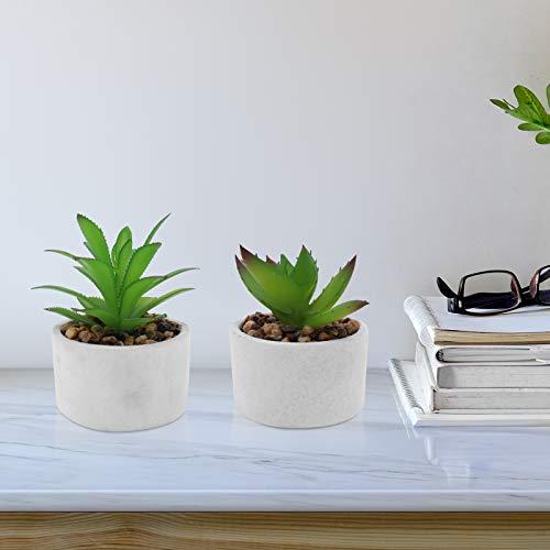 Seahelms Plantas
