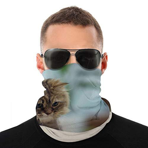OUYouDeFangA - Diadema unisex con diseño de animales de gato, multifunción, poliéster, de secado rápido, suave, pañuelo para el cuello, bufanda, pañuelo para la cabeza, máscara para el cuello, polaina, para hombres y mujeres